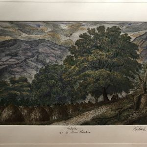 Árboles en la Sierra Mazateca